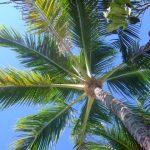 バリ島で人気の結婚式場5選!ランキング形式で紹介