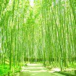京都で安い結婚式場ランキング5選